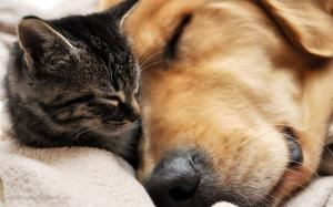 Cat & Dog sleeping
