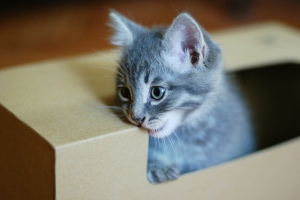 KItten in box