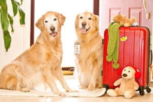 Retrievers & suitcases