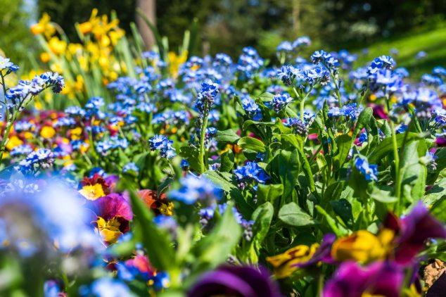 purple-and-blue-flowers-1039127